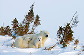 BEA 06 NE0106 01