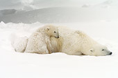 BEA 06 NE0108 01