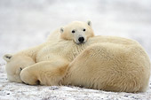 BEA 06 NE0109 01