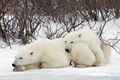 BEA 06 NE0110 01