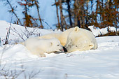 BEA 06 NE0111 01