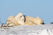 BEA 06 NE0113 01