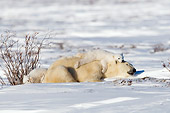 BEA 06 NE0114 01