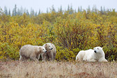 BEA 06 NE0116 01
