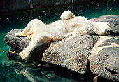 BEA 06 RC0001 01