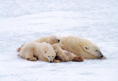 BEA 06 RF0066 01