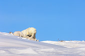 BEA 06 SK0002 01