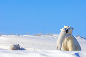 BEA 06 SK0003 01