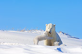 BEA 06 SK0004 01
