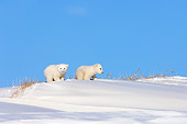 BEA 06 SK0005 01