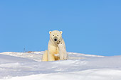 BEA 06 SK0008 01