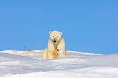 BEA 06 SK0010 01