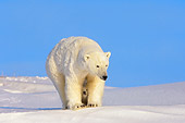 BEA 06 SK0011 01