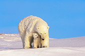 BEA 06 SK0012 01