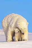 BEA 06 SK0013 01