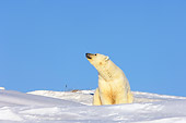 BEA 06 SK0023 01