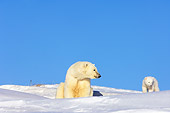 BEA 06 SK0027 01