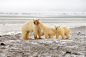 BEA 06 SK0028 01