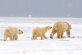 BEA 06 SK0030 01