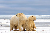 BEA 06 SK0032 01