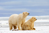 BEA 06 SK0033 01