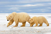 BEA 06 SK0035 01