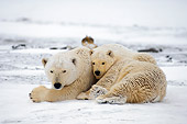 BEA 06 SK0036 01