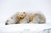 BEA 06 SK0037 01