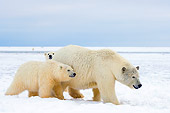 BEA 06 SK0041 01