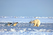 BEA 06 SK0042 01