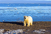BEA 06 SK0047 01