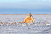 BEA 06 SK0049 01