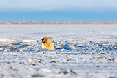 BEA 06 SK0050 01