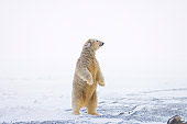 BEA 06 SK0067 01
