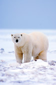 BEA 06 SK0070 01