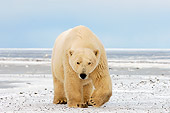 BEA 06 SK0075 01