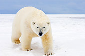 BEA 06 SK0079 01
