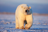 BEA 06 SK0082 01