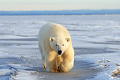 BEA 06 SK0084 01
