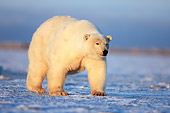 BEA 06 SK0092 01