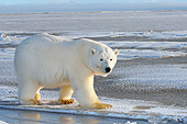 BEA 06 SK0094 01