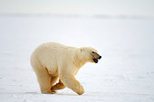 BEA 06 SK0097 01