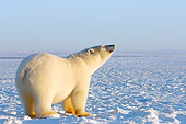 BEA 06 SK0101 01