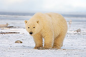 BEA 06 SK0110 01