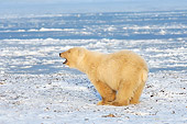 BEA 06 SK0111 01
