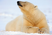 BEA 06 SK0115 01
