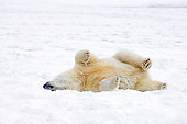 BEA 06 SK0118 01