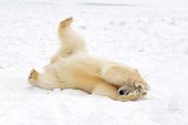 BEA 06 SK0120 01
