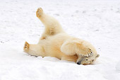 BEA 06 SK0121 01