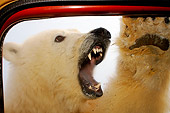 BEA 06 SK0125 01